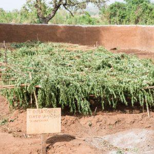 Biologisches Gartenprojekt