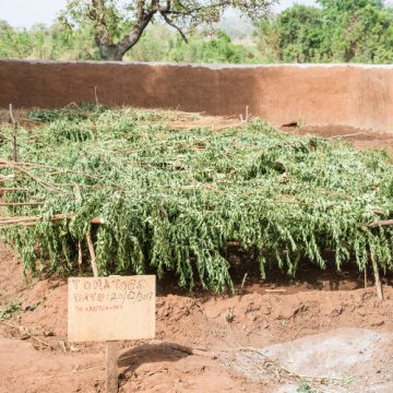 Organic garden project
